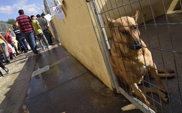 El abandono de animales se reduce en m laga pero tambi n for Protectora de animales malaga ciudad jardin