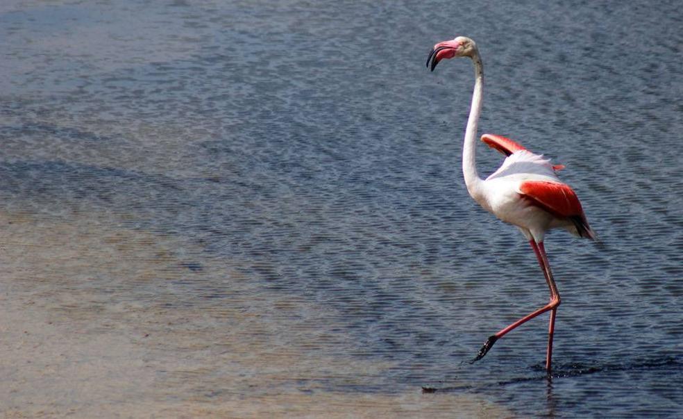 c208a94eb La Desembocadura del Guadalhorce: qué ver en un paraje único en ...